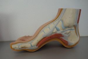 voet-veel-voorkomende-klachten